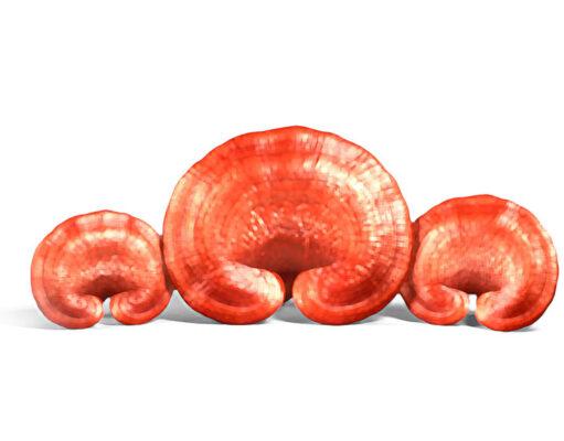 Natur Tanya - Szerves Ganoderma Pecsétviaszgomba - 60db tabletta